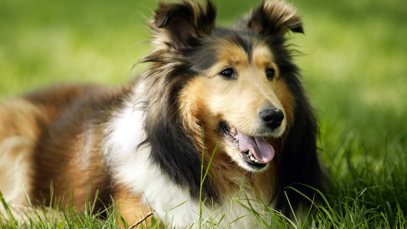 How Long Can A Healthy Dog Live?